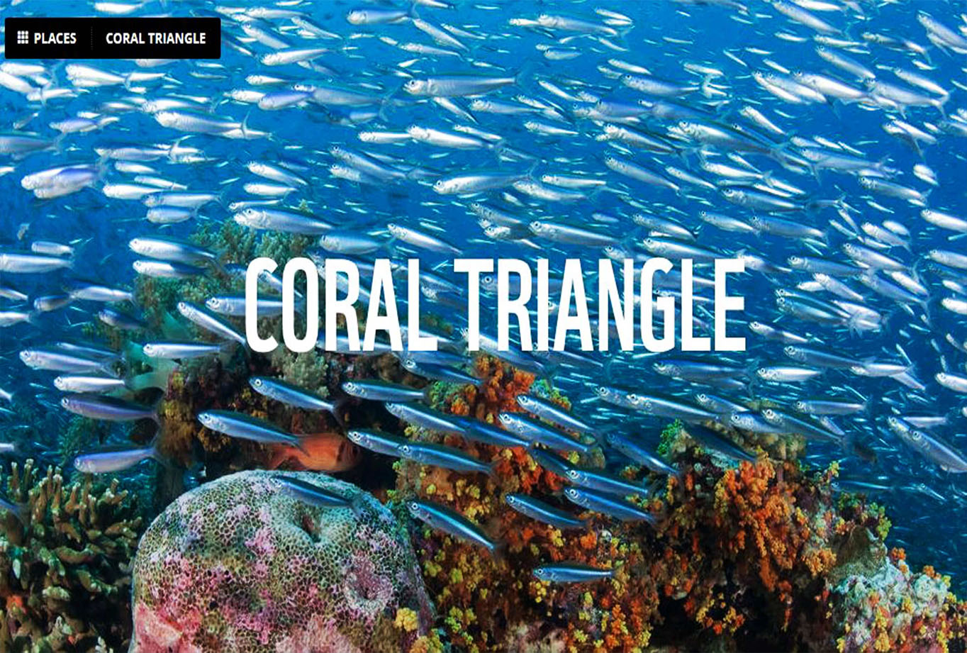 The Coral Triange